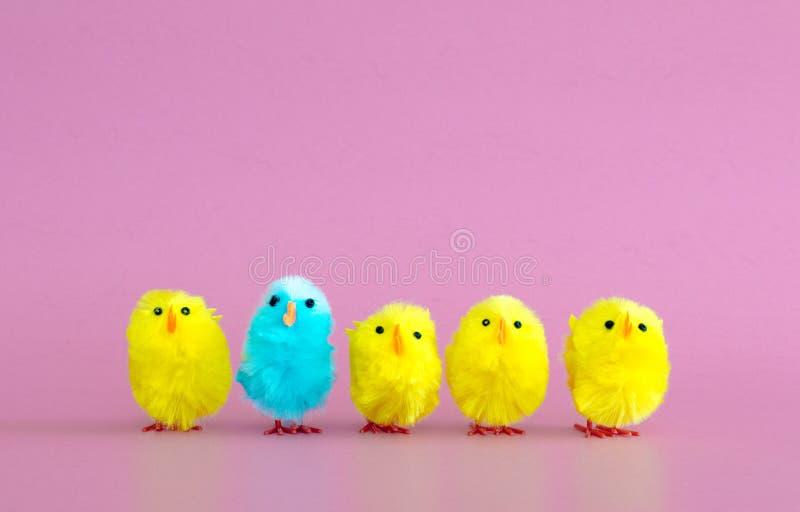4 koloru żółtego zabawkarskiego Wielkanocnego kurczątka i 1 turkusowego kurczątko z rzędu zdjęcia stock