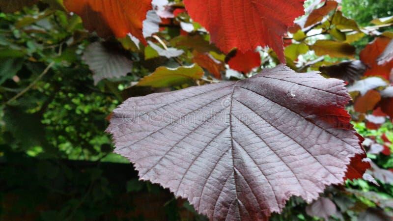Koloru drzewny świat ładny cześć zdjęcie stock