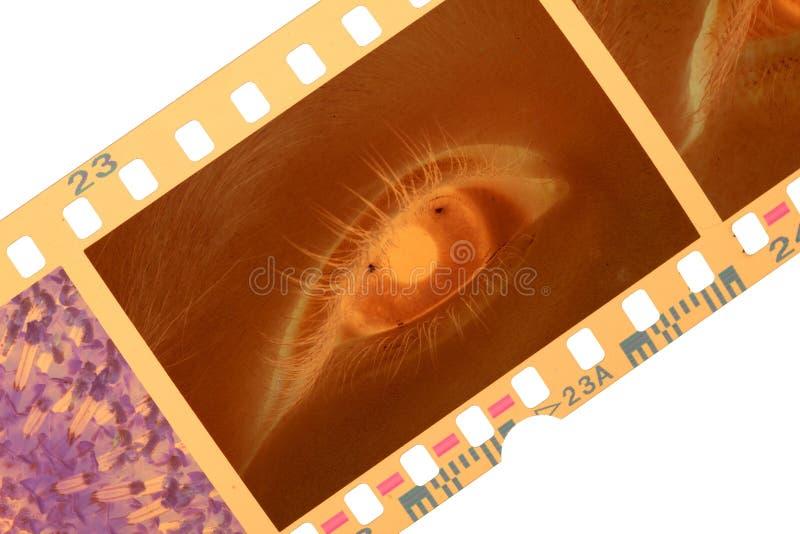 Koloru oko i obrazy stock