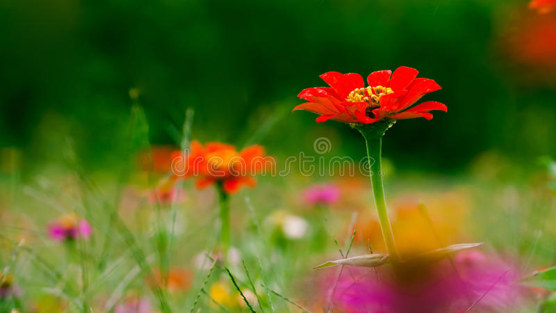 Download Koloru spadek zdjęcie stock. Obraz złożonej z trawy, roślina - 21738110