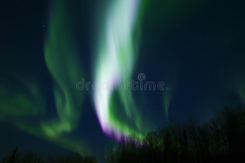 kolory aurora. fotografia royalty free