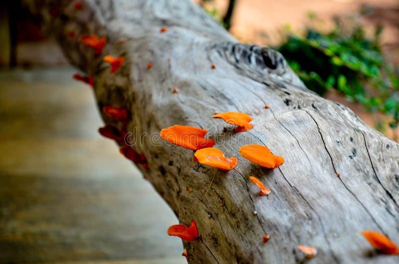 Kolory grzyb są wspaniali gdy ono przesiąka gatunki zdjęcie royalty free