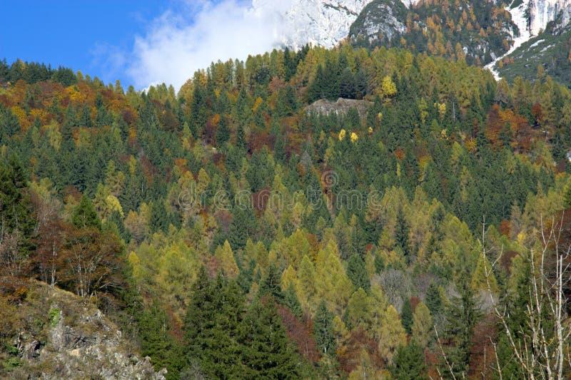 Kolory jesień dolomity obrazy stock