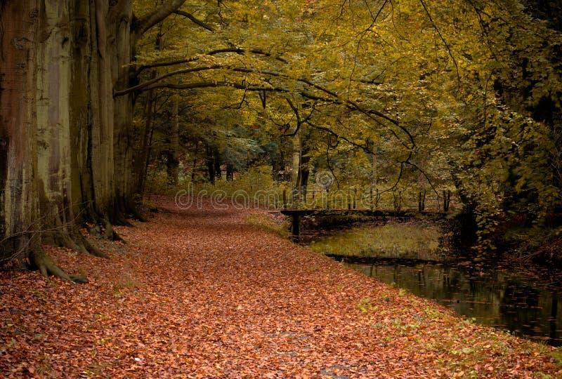 kolory jesieni obrazy royalty free