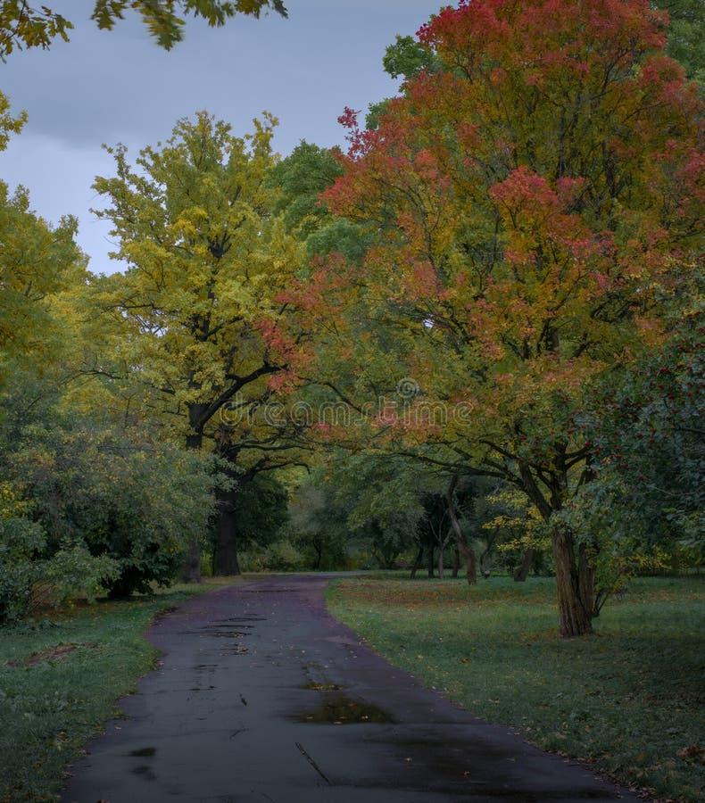 Kolory jesieni w ogródku Botanicznym w parku Moskwa obraz royalty free