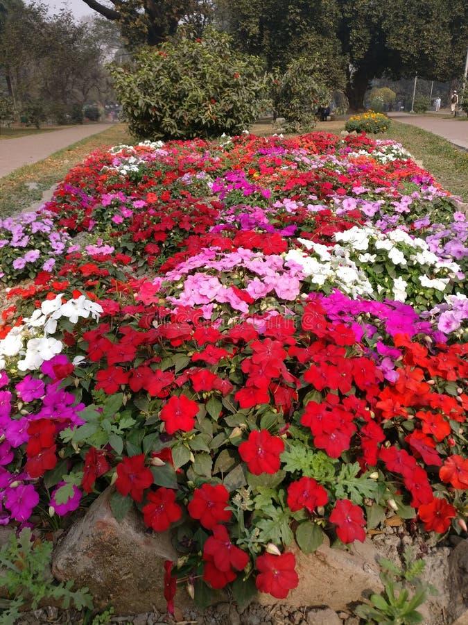 Kolory kwiat zdjęcie stock