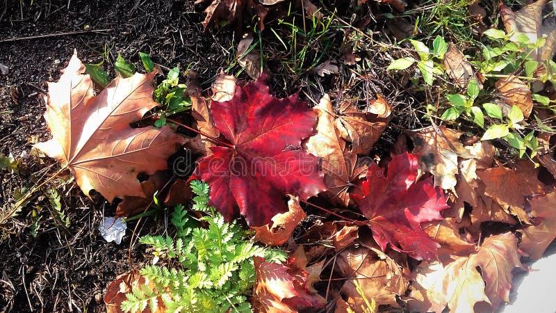 Kolory natura w spadku Smutny piękno przelotny lato obrazy royalty free