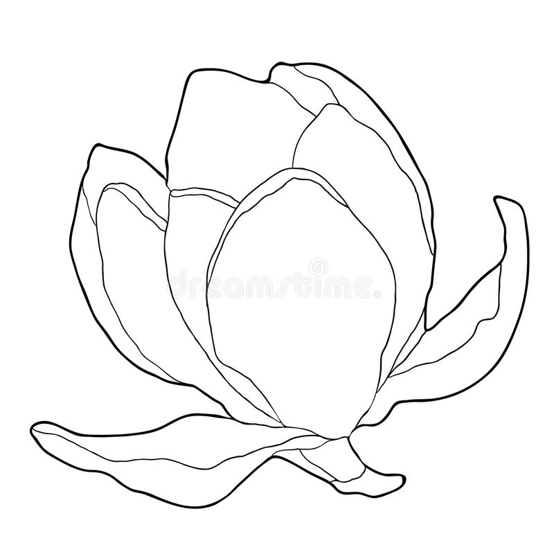 Kolorystyka kwiatu ogródu magnoliowa dekoracyjna wektorowa ilustracja royalty ilustracja