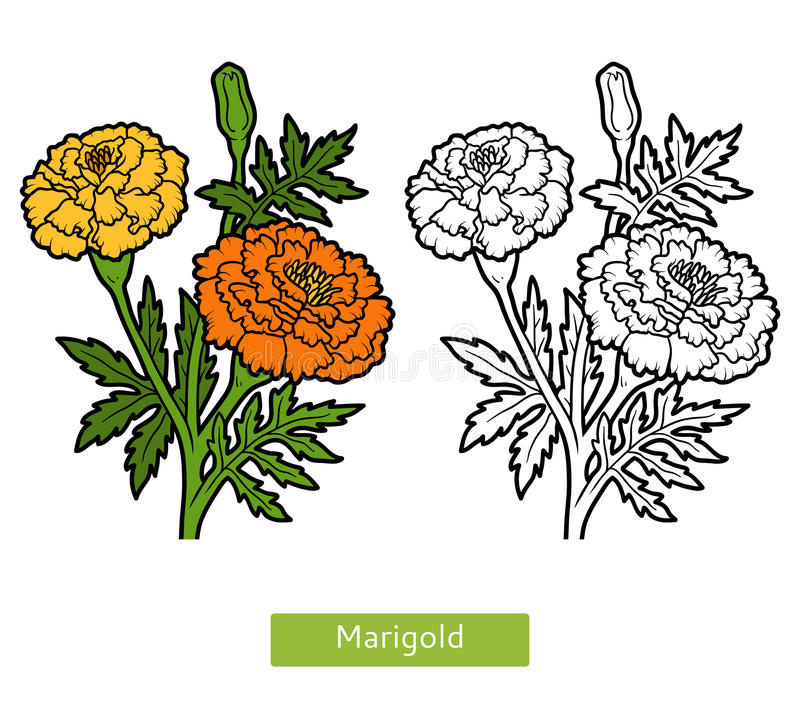 Kolorystyki książka, kwiatu nagietek royalty ilustracja