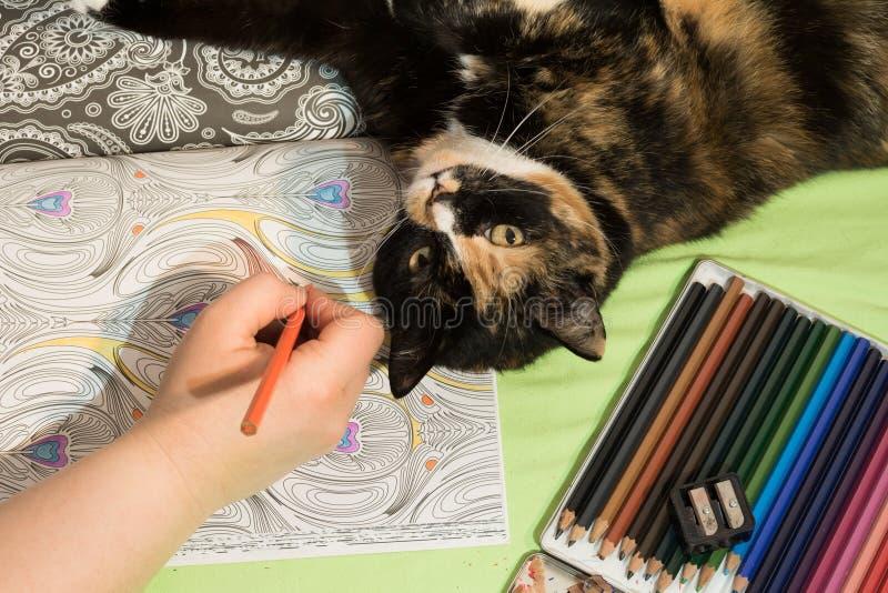 Kolorystyki książka, ołówki, ręka i kot, zdjęcie royalty free