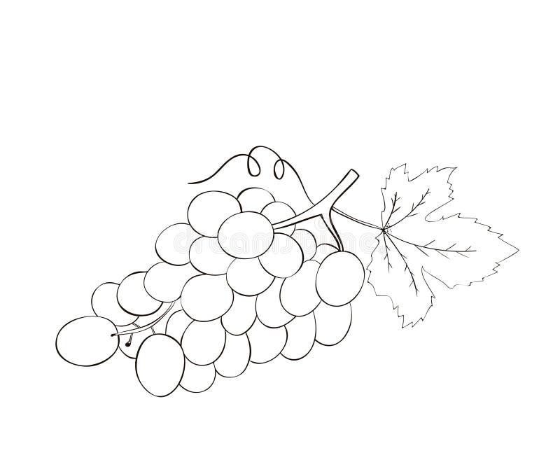Kolorystyki książki Wektorowa ręka rysujący winogrono ilustracji