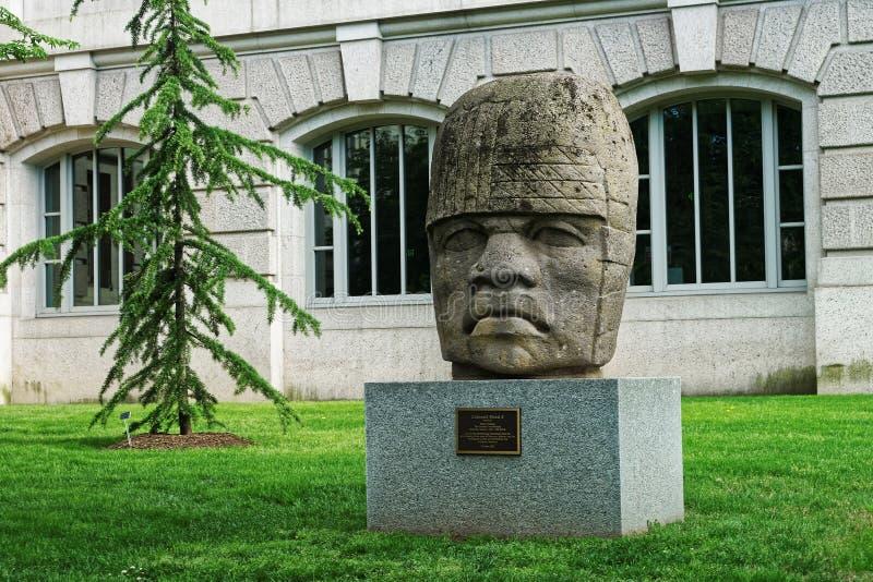 Kolosalna Olmec głowa 4 blisko historii naturalnej muzeum zdjęcie stock