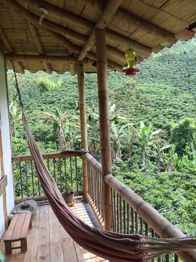 Kolumbia doliny kawowa zieleń obrazy stock