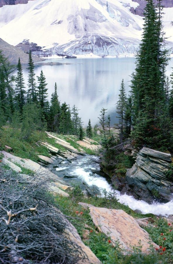kolumbiego rocky mountain brytyjskiej jeziora odrzutowiec fotografia royalty free
