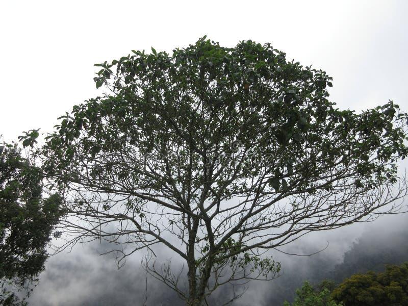 Kolumbijski drzewo park obraz stock