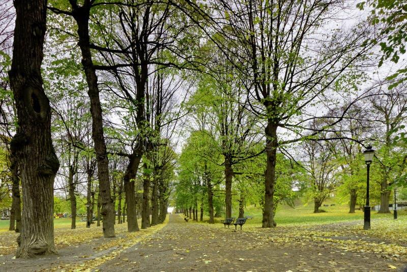 Kolumnada wapno drzewa w parku zdjęcie royalty free
