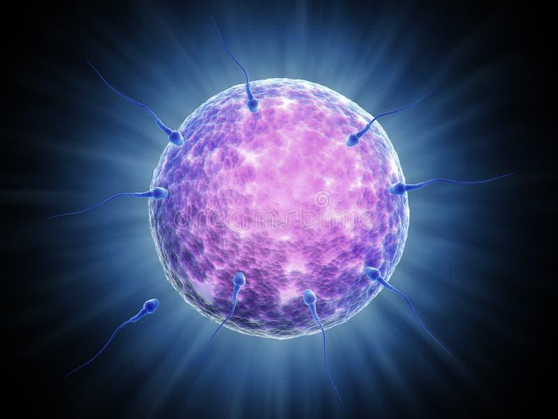 komórek bramkowa dojechania sperma ich ilustracja wektor