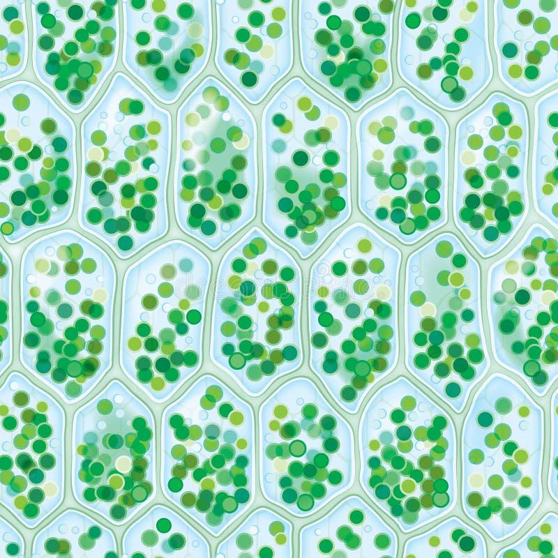 komórek chlorofilu wzór bezszwowy ilustracja wektor