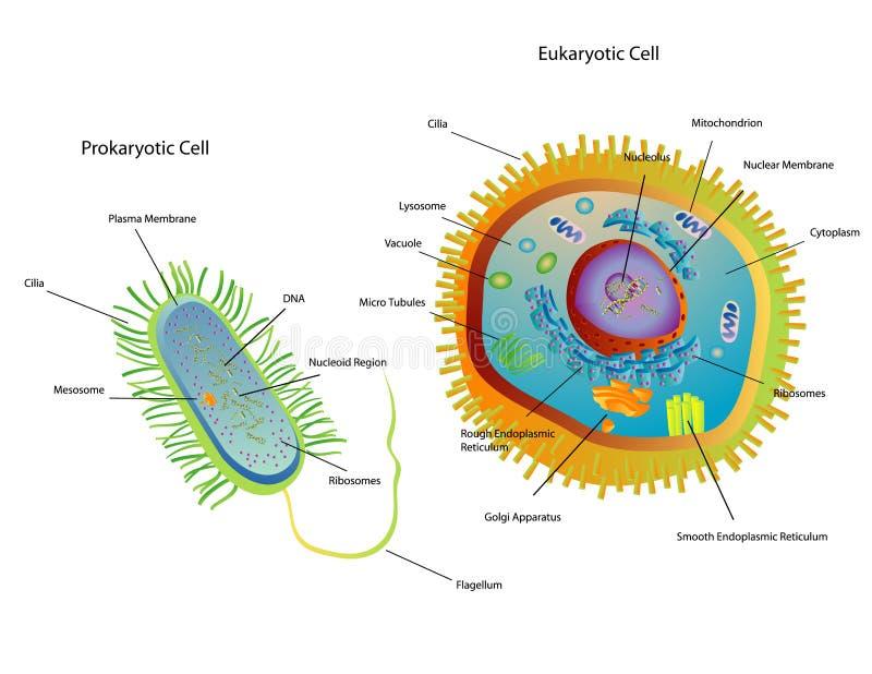 komórki. royalty ilustracja