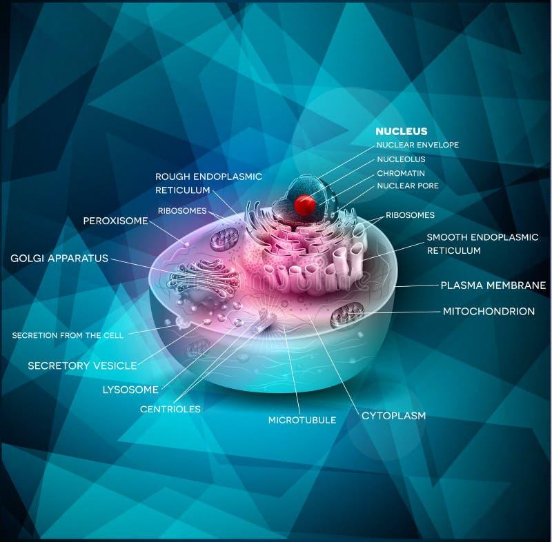 Komórki anatomii piękny abstrakcjonistyczny projekt ilustracja wektor