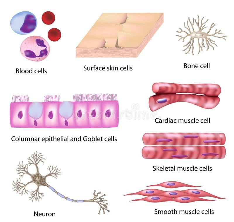 komórki kolekci istota ludzka royalty ilustracja