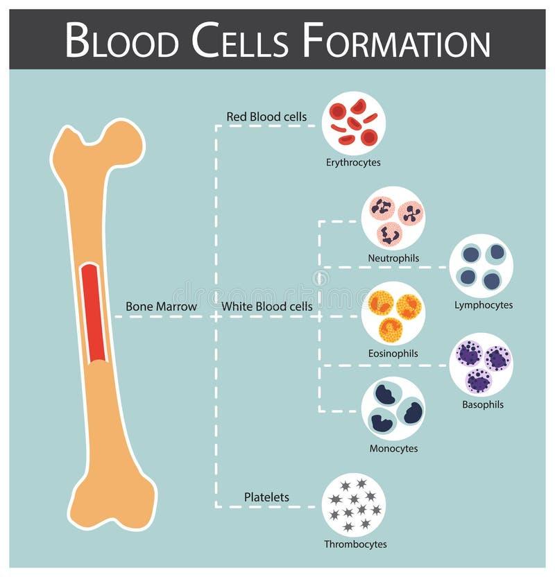Komórki krwi formacja ilustracja wektor