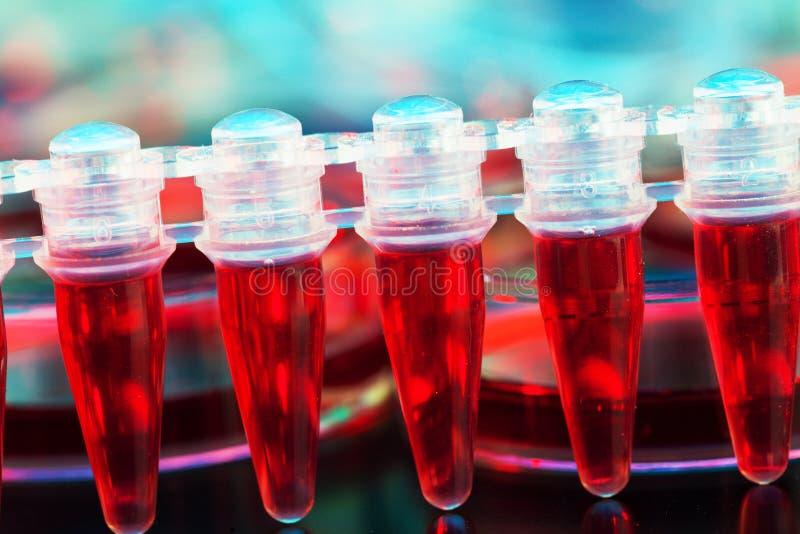 Komórki macierzyste dla taktować nowotwór fotografia royalty free