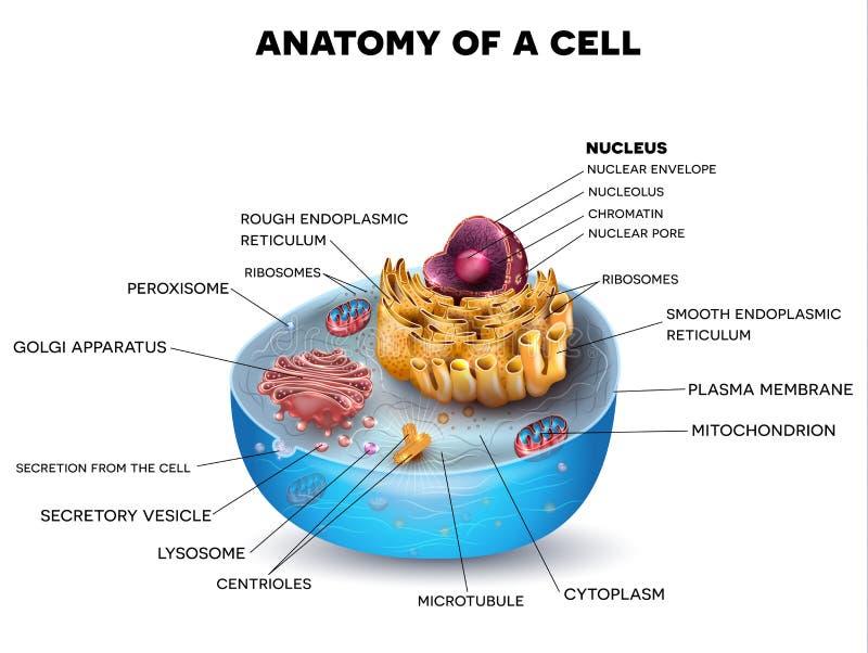 Komórki struktura ilustracji