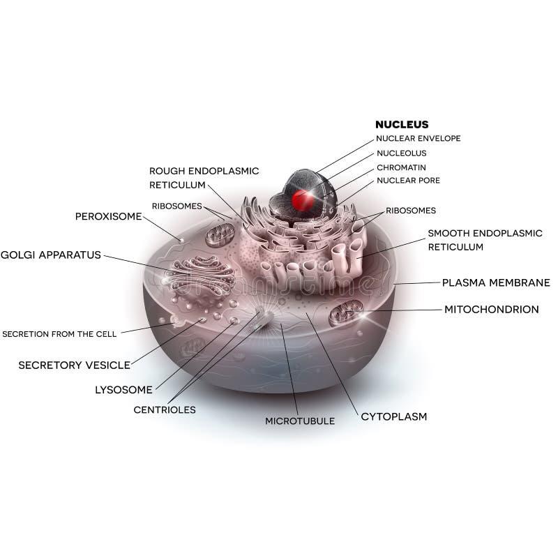 Komórki struktury koloru piękna ilustracja ilustracji