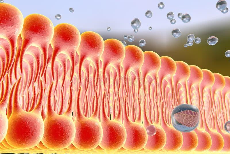 Komórkowa błona z dyfundowaniem molekuły ilustracja wektor