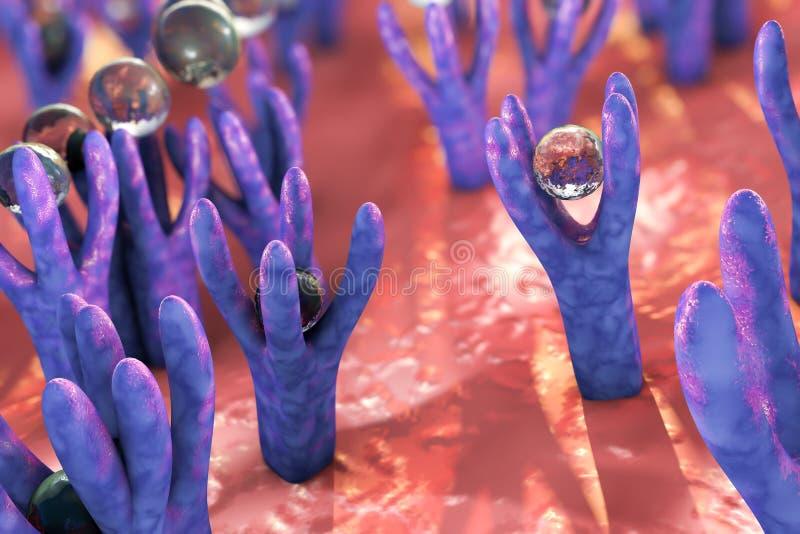 Komórkowa błona z receptorami royalty ilustracja