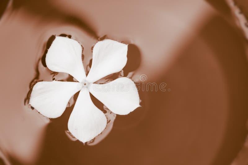 Kom chocolade met witte bloem daarin stock fotografie