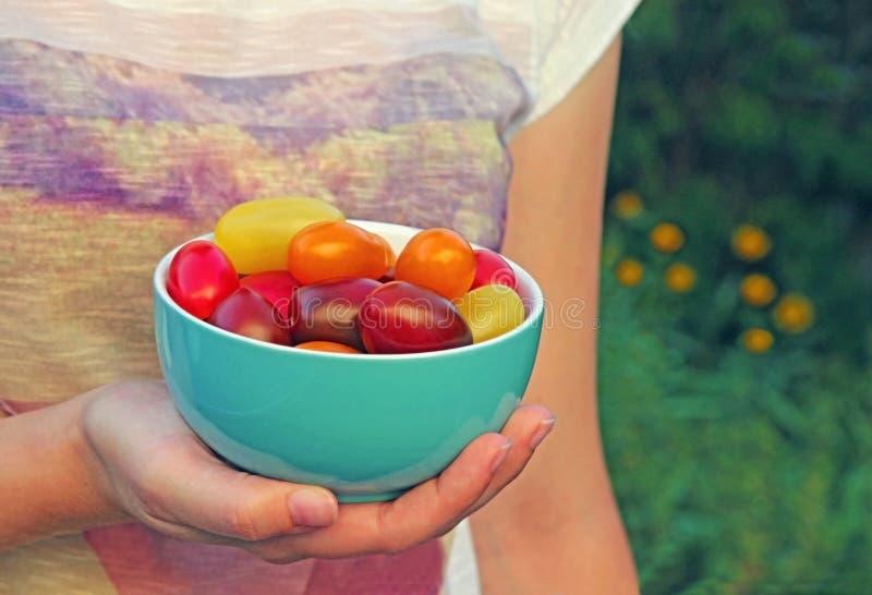 Kom met multi gekleurde die tomaten, door een jonge vrouw worden gehouden stock foto