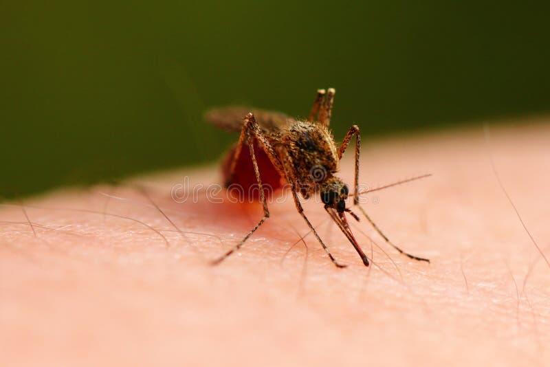 komar obrazy stock