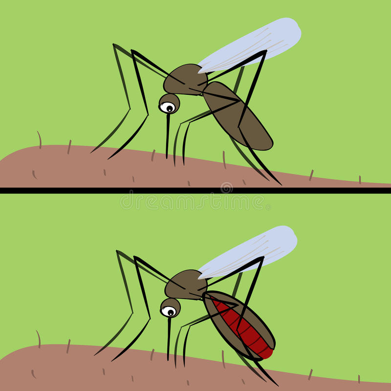 Komar pije krew Insekta wektor malaria i fev ilustracja wektor