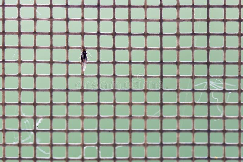 Komar sieć z insektem w górę kosmos kopii zdjęcia stock