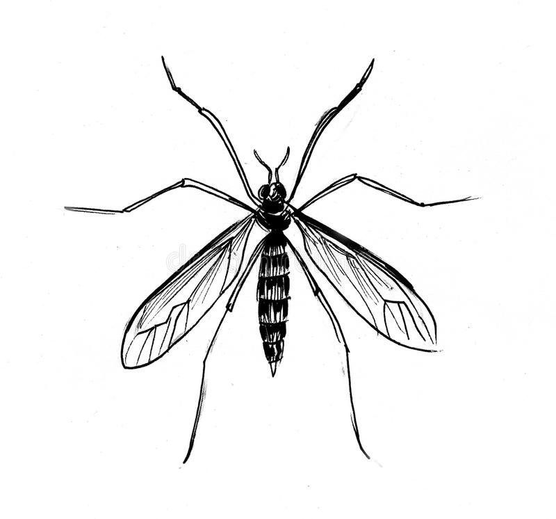 Komara insekt ilustracji