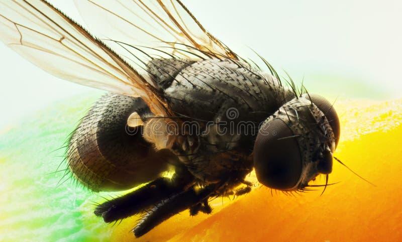 komarnica zdjęcie stock