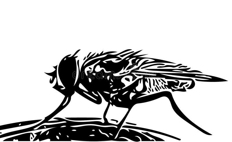 komarnicy ilustracji