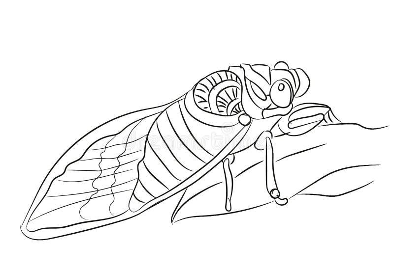 Komarnicy grafiki linia, wektor royalty ilustracja