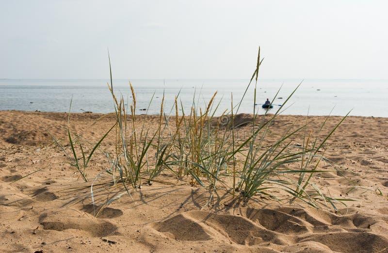 Komarovo beach of Gulf of Finland