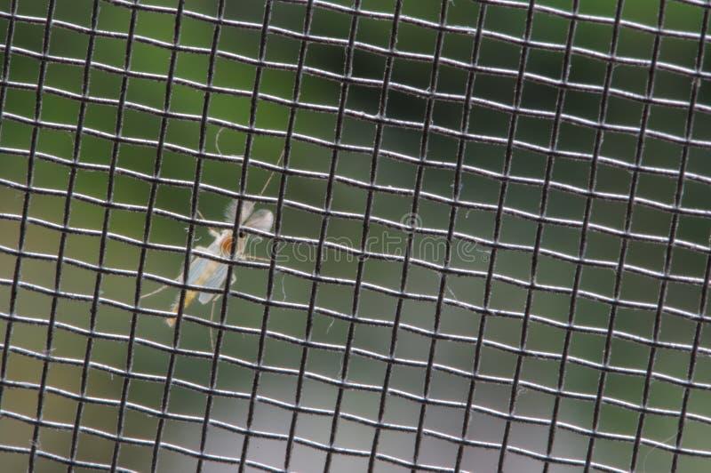 komary zdjęcie royalty free