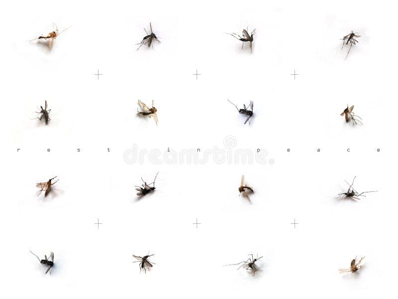 komary obraz stock