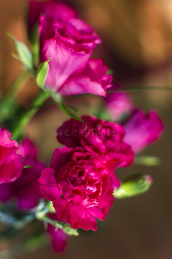 Kombinacja goździki z różami w menchiach barwi zdjęcia royalty free