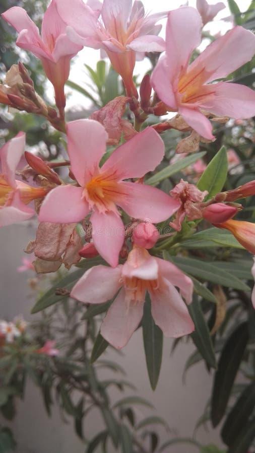 Kombinationen blommar min trädgård royaltyfria foton