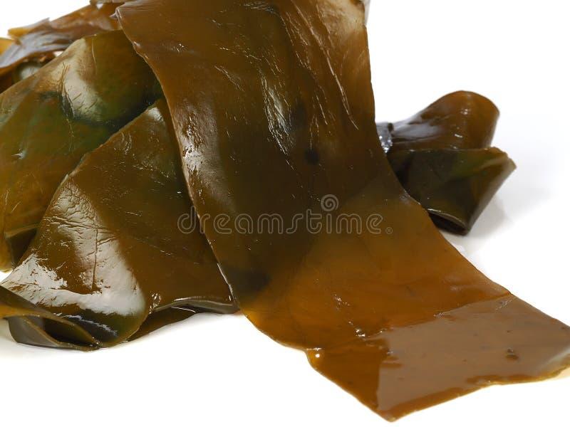 Kombu-Kelp - Alga Kombu stockfotos