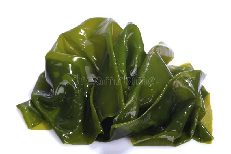 Kombu kelp is a large brown algae seaweed. Binomial name: Laminaria Ochroleuca. It is an edible seaweed used extensively in Japane. Se cuisine. on white stock image