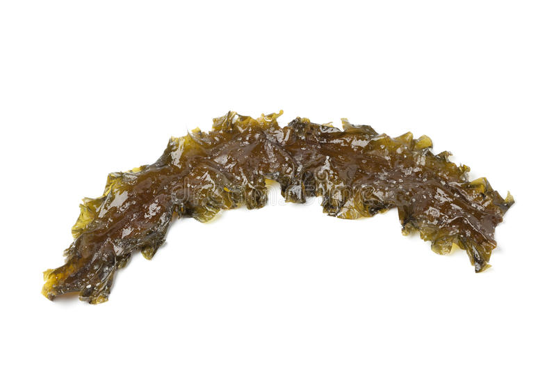 Download Kombu Royal seaweed stock photo. Image of kombu, saccharina - 24516264