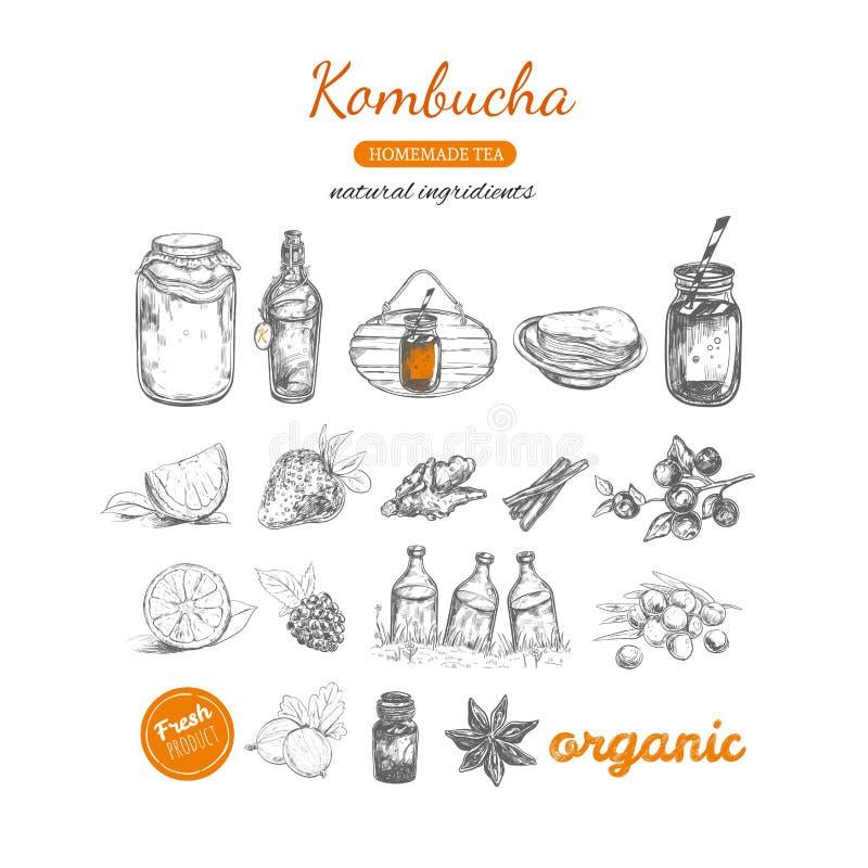 Kombucha homemade tea collection. Vector hand drawn illustration royalty free illustration