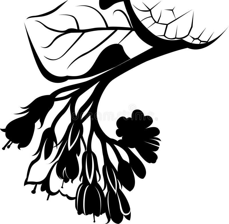 Komfrey Symphytum officinale kwiaty stosowane w medycynie organicznej royalty ilustracja